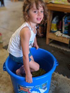 Evelina crushing grapes!